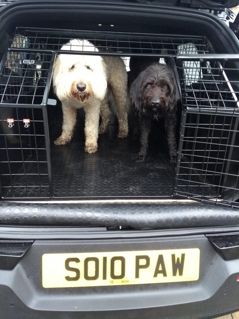 Two Doodle dogs in dog transport cage